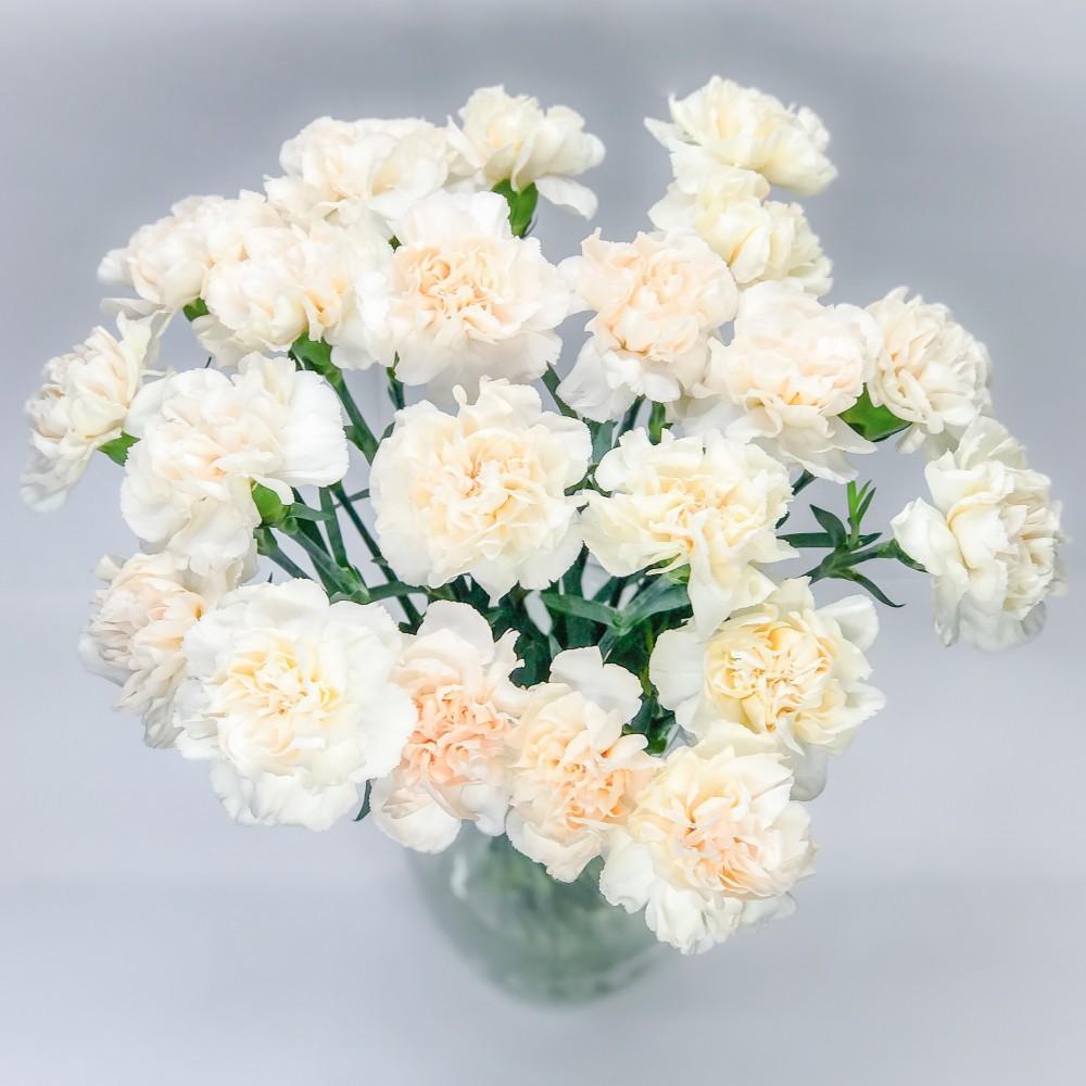 Красивые букеты из белых гвоздик